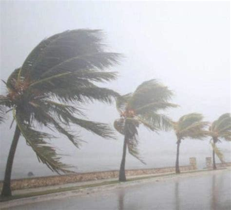 Strong winds hit hilly regions of Kozhikode causing heavy